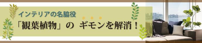 インテリアの名脇役「観葉植物」のギモンを解消!!