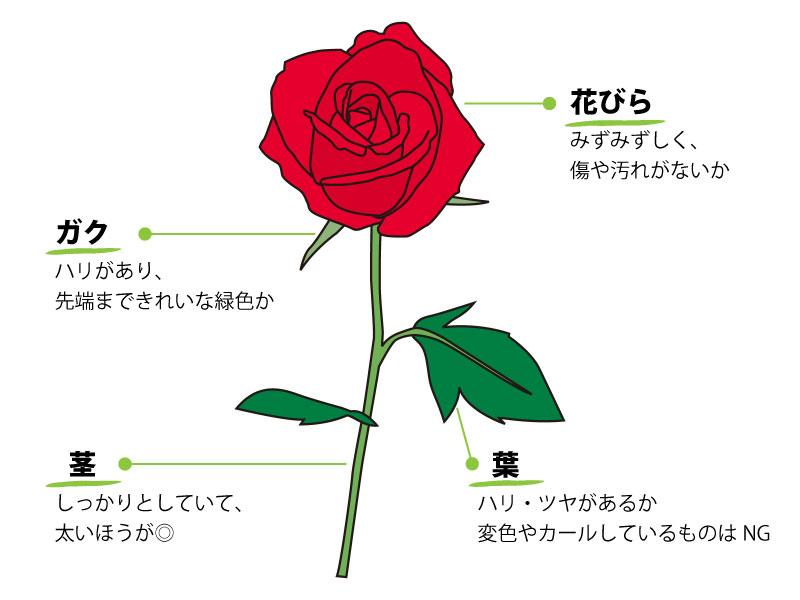よい花を購入するポイント
