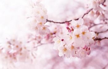 pink_49182295
